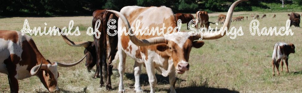 Animals of Enchanted Springs Ranch